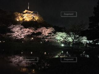 塔のふもとの鮮やかな夜桜の写真・画像素材[1149379]