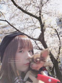 春,桜,チワワ,私