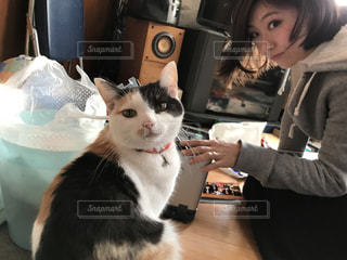 猫と女性の写真・画像素材[2298134]