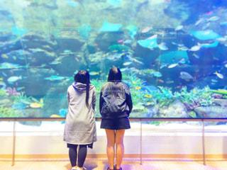 魚,後ろ姿,水族館,女の子,友達