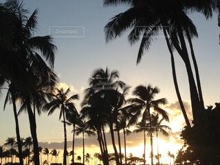 ハワイの夕方。ヤシの木のある風景の写真・画像素材[1940974]