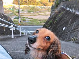 犬の写真・画像素材[2042390]