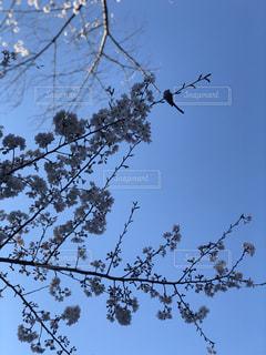 木の枝にとまった鳥の写真・画像素材[1943272]