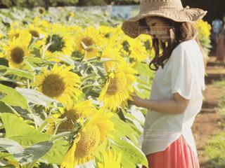 ひまわり畑の写真・画像素材[2106204]