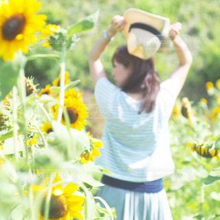 ひまわり畑と私の写真・画像素材[2131549]