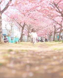 桜並木の可愛い天使の写真・画像素材[2131572]