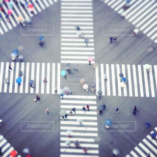 傘の花の写真・画像素材[2145050]
