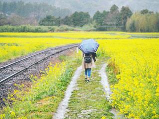 雨でも綺麗の写真・画像素材[2164640]