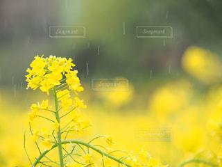 春雨の写真・画像素材[2168103]