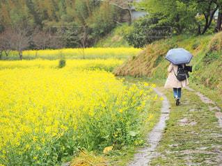 雨の中を颯爽との写真・画像素材[2179689]
