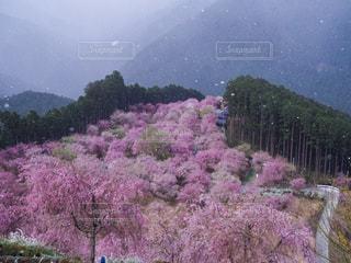 梅山と雪の写真・画像素材[2211211]