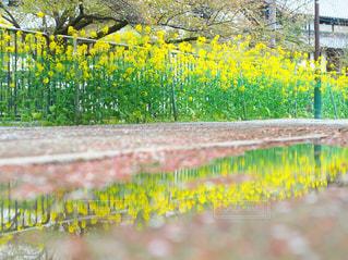 春のコントラストの写真・画像素材[2214107]