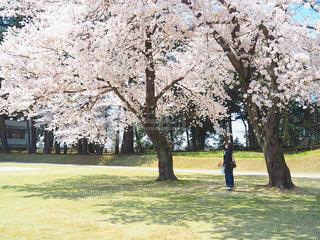 穏やかな春の日の写真・画像素材[2260070]