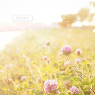 好きな時間と光の写真・画像素材[2260139]