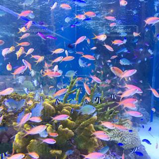 熱帯魚の写真・画像素材[2341878]