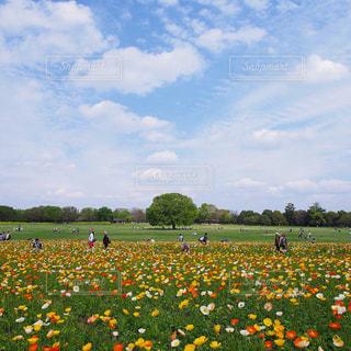 カラフルポピー畑の写真・画像素材[2361092]