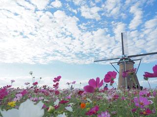 曇りの日にピンクの花のグループの写真・画像素材[2411455]