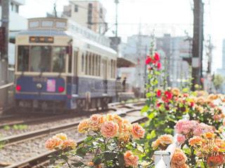 風景,花,屋外,電車,レトロ,薔薇,フィルム,下町,都電,フィルム写真,フィルム調,フィルムフォト