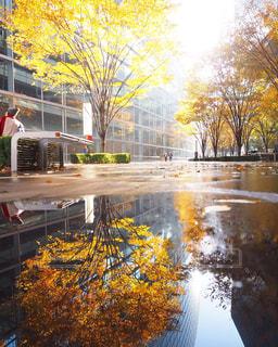 水面に映る紅葉の写真・画像素材[2511339]