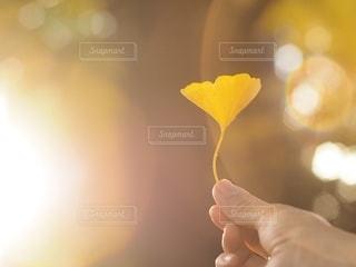 イチョウの落ち葉の写真・画像素材[2624193]