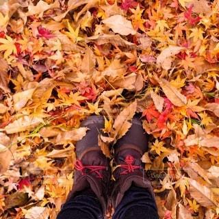 紅葉の絨毯の写真・画像素材[2700682]