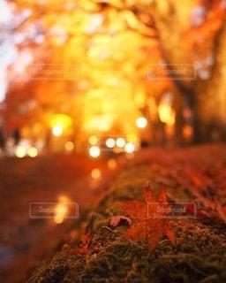 輝く紅葉の写真・画像素材[2781879]
