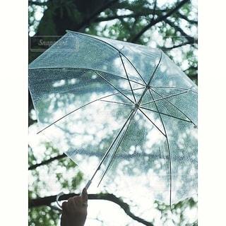 雨の日の木漏れ日の写真・画像素材[2781890]