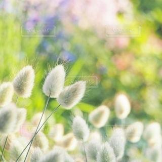 様々なお花の玉ボケの写真・画像素材[2781915]