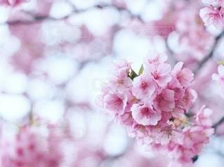 春の喜びの写真・画像素材[2781922]