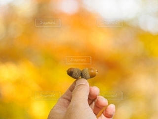 秋の淡い想い出の写真・画像素材[2782506]