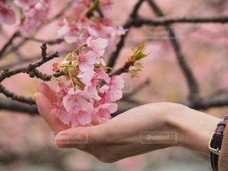 花を持つ手の写真・画像素材[2798116]
