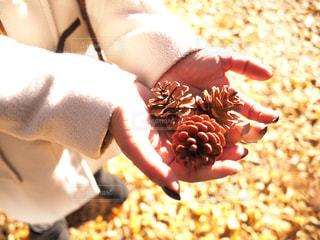 秋の贈り物の写真・画像素材[2798313]