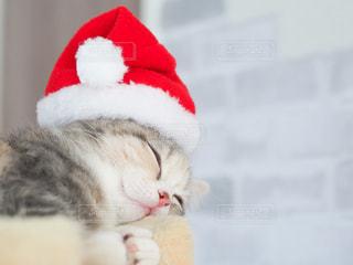 猫サンタの写真・画像素材[2823153]