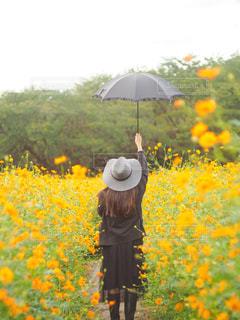 女性,ファッション,自然,公園,花,お花畑,傘,屋外,コスモス,後ろ姿,黒,帽子,黄色,鮮やか,草花,スカート,人物,ブーツ,日傘,コーディネート,コーデ,カラー,ジャケット,草木,日中,ブラック,黒コーデ