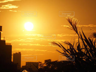 風景,空,夕日,屋外,太陽,雲,夕焼け,夕暮れ,シルエット,光,ススキ,夕陽,明るい,クラウド
