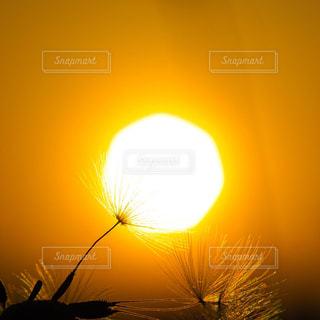 綿毛の電球の写真・画像素材[2857197]