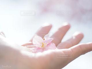花を持つ手の写真・画像素材[2887978]