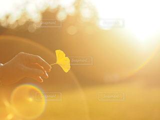 秋のフレアの写真・画像素材[2888078]