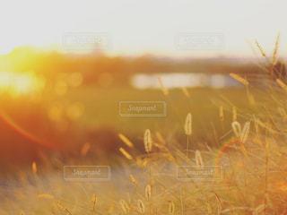 夕焼け時の写真・画像素材[2905872]