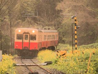 春の小湊鐵道の写真・画像素材[2905948]