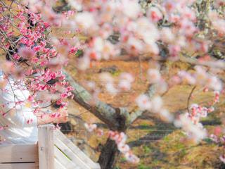 春を楽しむの写真・画像素材[3014976]