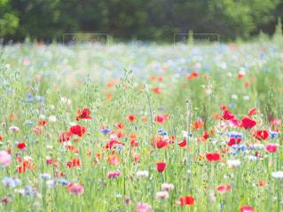 花畑のクローズアップの写真・画像素材[3029462]