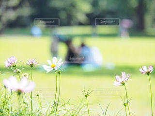秋の庭園での写真・画像素材[3029482]