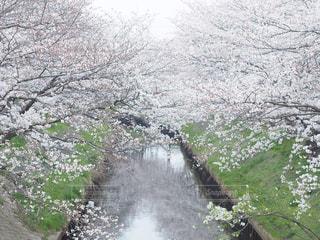 咲き誇るの写真・画像素材[3033662]