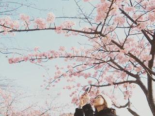 女性,1人,空,花,春,屋外,青空,花見,満開,樹木,お花見,人,桜の花,さくら,ブロッサム