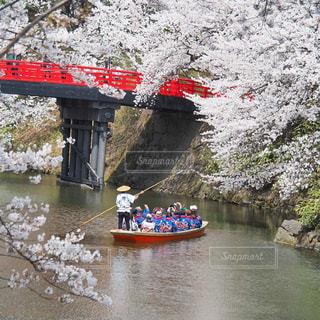 弘前の春の風景の写真・画像素材[3033683]