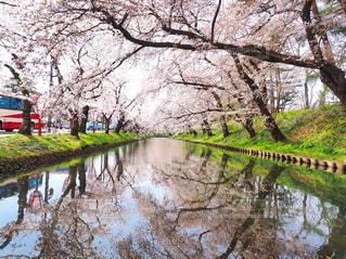弘前公園の写真・画像素材[3033688]