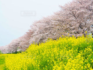 春の絶景の写真・画像素材[3033707]