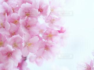 花のクローズアップの写真・画像素材[3033884]
