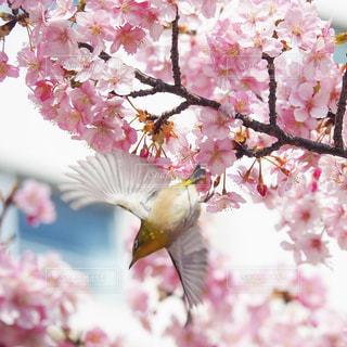 羽を広げての写真・画像素材[3033947]